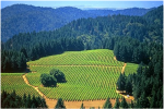 calif-lulacellars-vineyard-fmabv--
