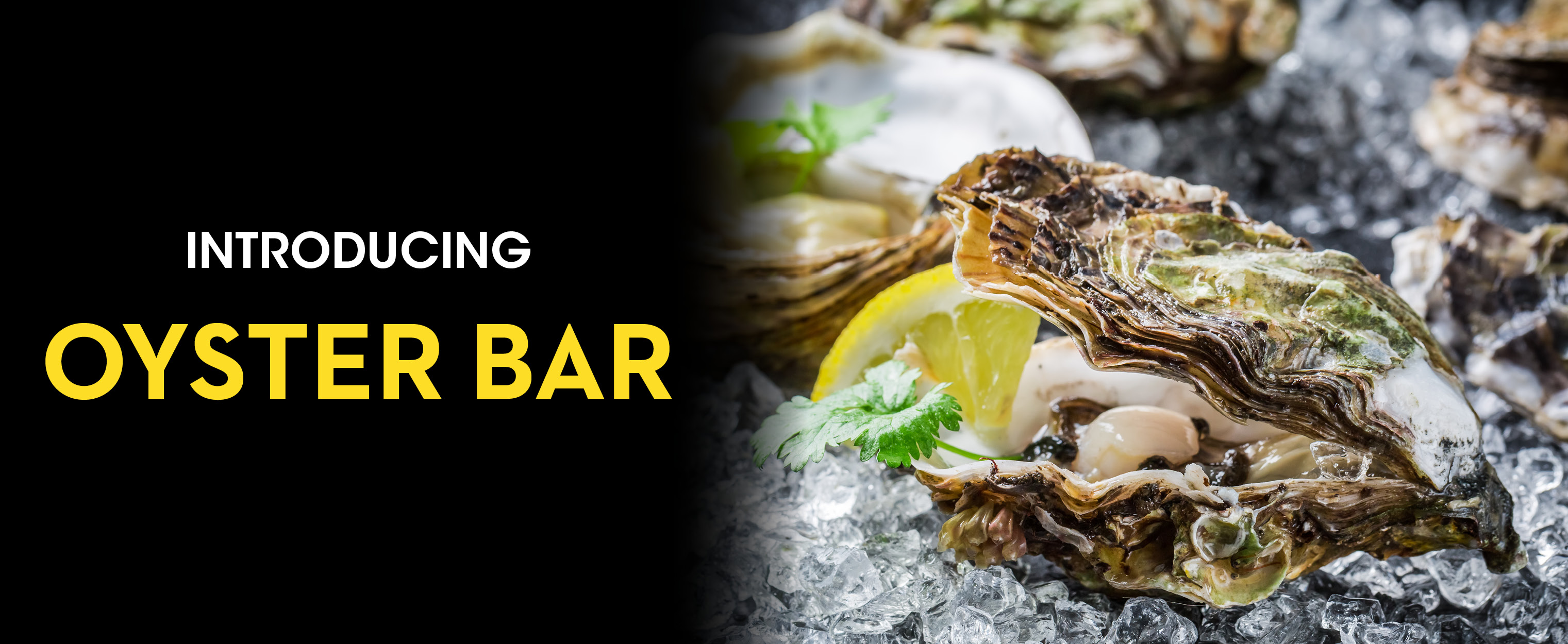oyster_bar_opening