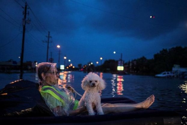 rescue-helicopter-hovers-background-elderly-woman-poodle-air-mattress-float-flood-waters-tropical-storm-harvey-waiting-rescued-scarsdale-boulevard-houston. (1)